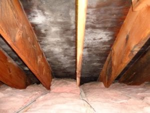 Hire Mold Professionals